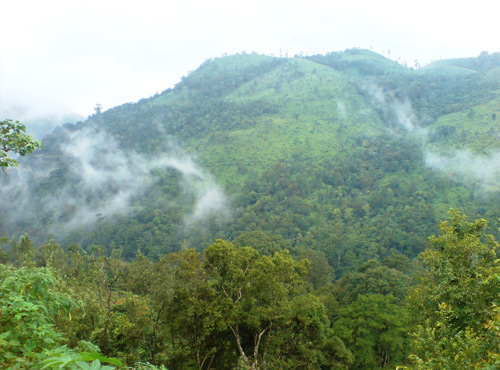Peerumedu, Hill places, Kerala Places, Attractive, Grassroot Holidays